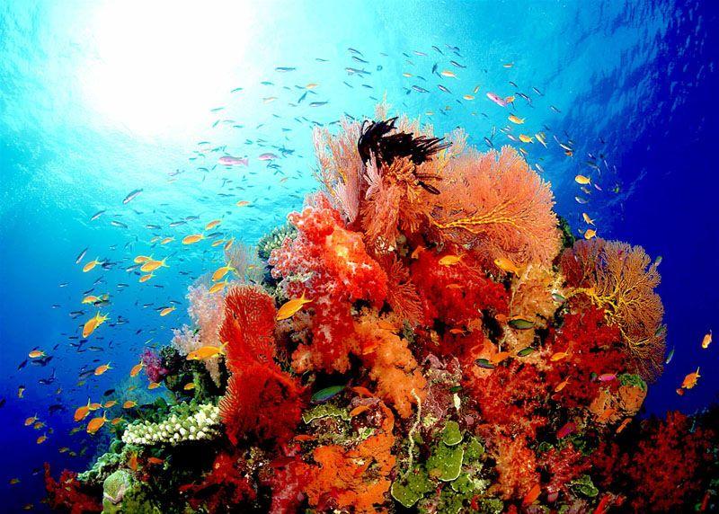 Дайв сайты Симиланских островов фото